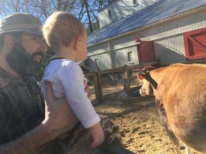 Erich River Cow