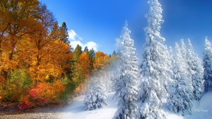 fall-to-winter-254227
